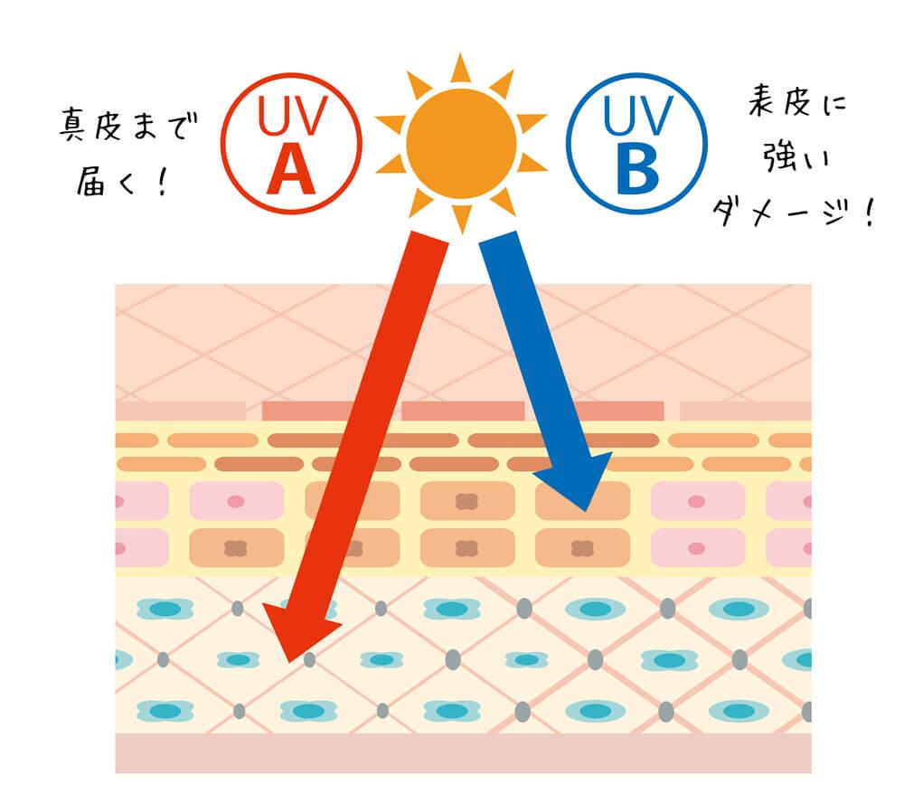 紫外線には真皮まで届く「UV-A」と、表皮に強いダメージを与える「UV-B」の2種類がある
